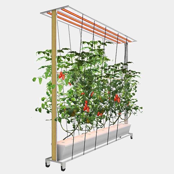 Grow Vine-R