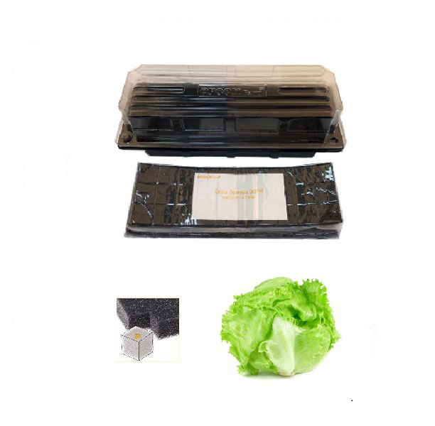 Grow Sponge-Green Lettuce