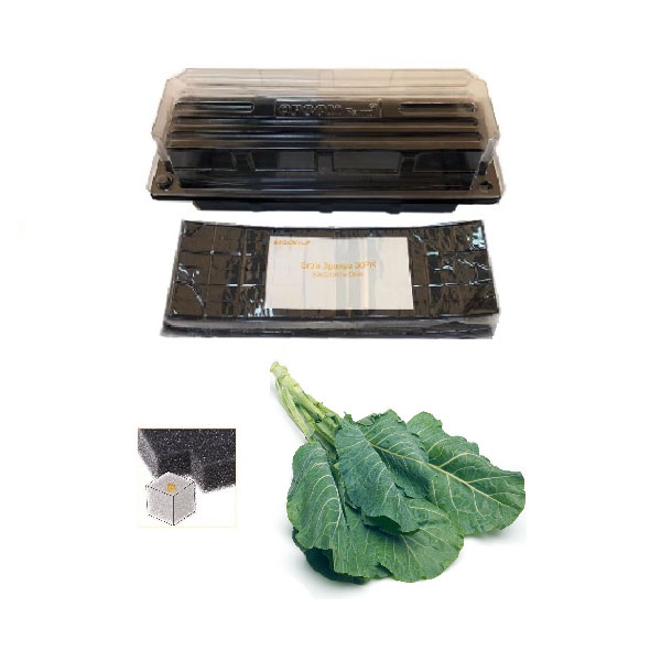 Grow Sponge-Collard Greens
