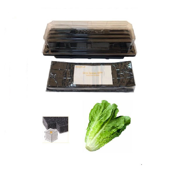Grow Sponge-Parris Island Heirloom Lettuce