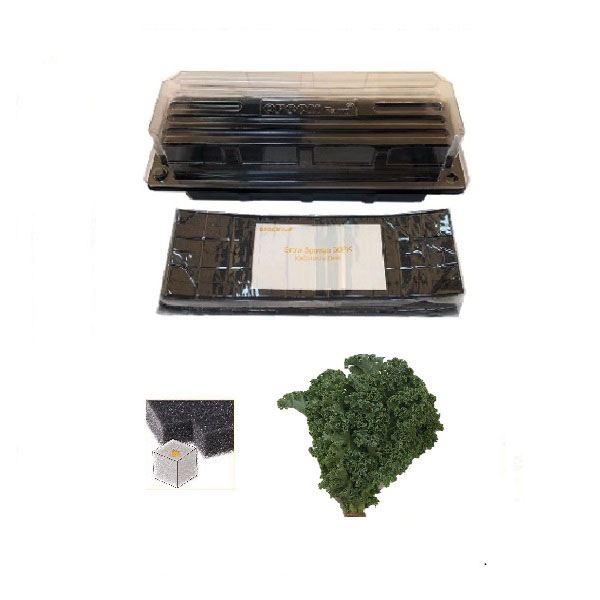 Grow Sponge-Mixed Kale