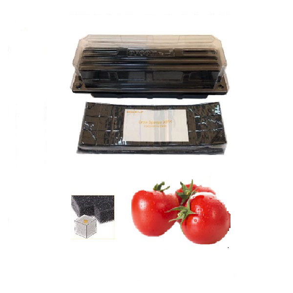 Grow Sponge-Red Heirloom Cherry Tomato