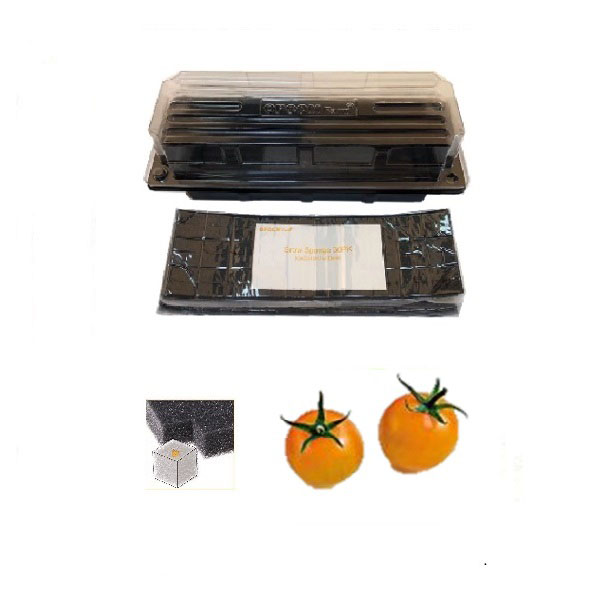 Grow Sponge-Golden Harvest Cherry Tomato