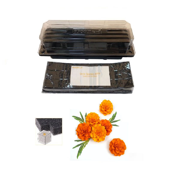 Grow Sponge-Marigold - Rust/Orange (Flower Pod)
