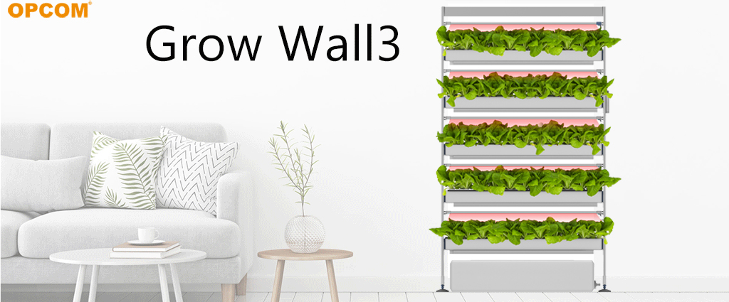 Indoor Hydroponics-No Soil, No Dirty Hand, All Year Round Harvest.