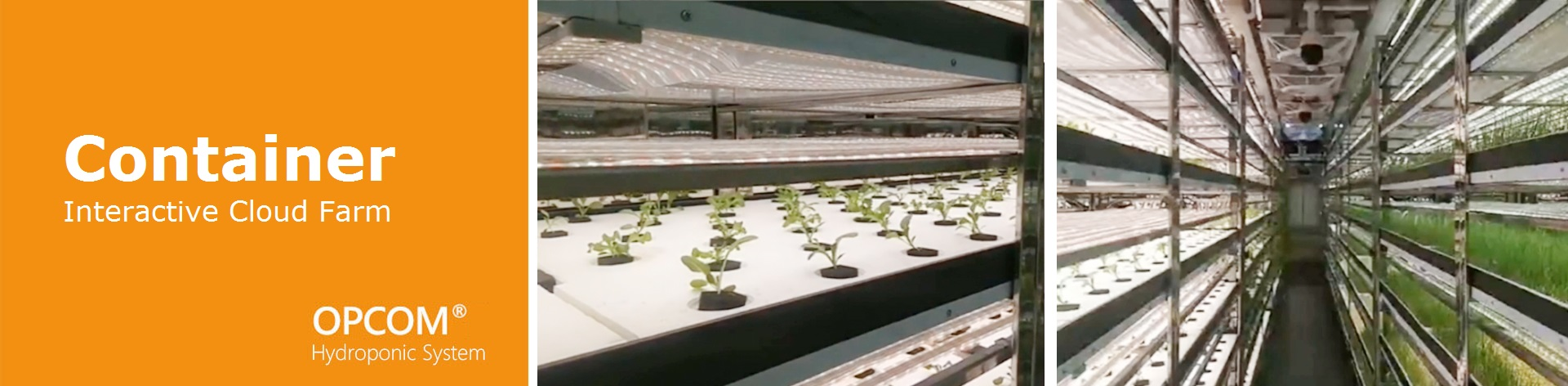 Application for Mass Production-Interactive Cloud Farm, Hydroponic System